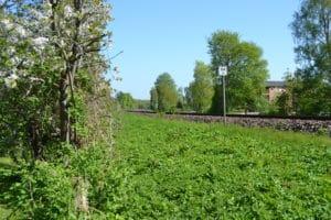 Banedanmark på havebesøg i Brabrand: Træer og buske skal beskæres