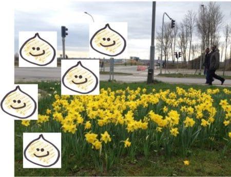 Forberedelser til forår: Vær med til at lægge 2000 løg i Gellerup