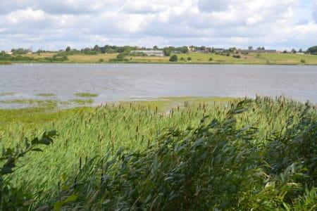 Byrådet skal diskutere genetablering af å ved Årslev Engsø