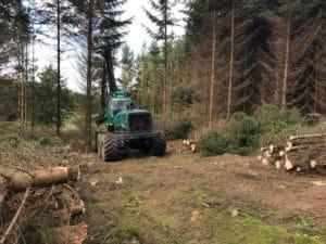 Græsning skal gøre True Skov mere indbydende