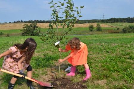 Lokal glæde: Snart vokser True Skov frem i Lyngby