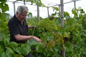 12 familier avler vin af høj kvalitet i Brabrand Valley