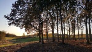 Vil du bidrage til stor sommer-event i True Skov?