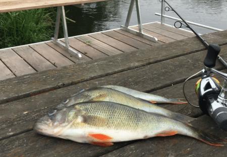 Tag med ud og fisk – på søndag ved Søskovvej