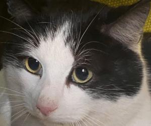 Bilka-katten blev indfanget og har nu fået et hjem